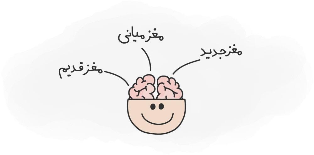 تمرکز بر آخرین اطلاعات- ساختار مغز